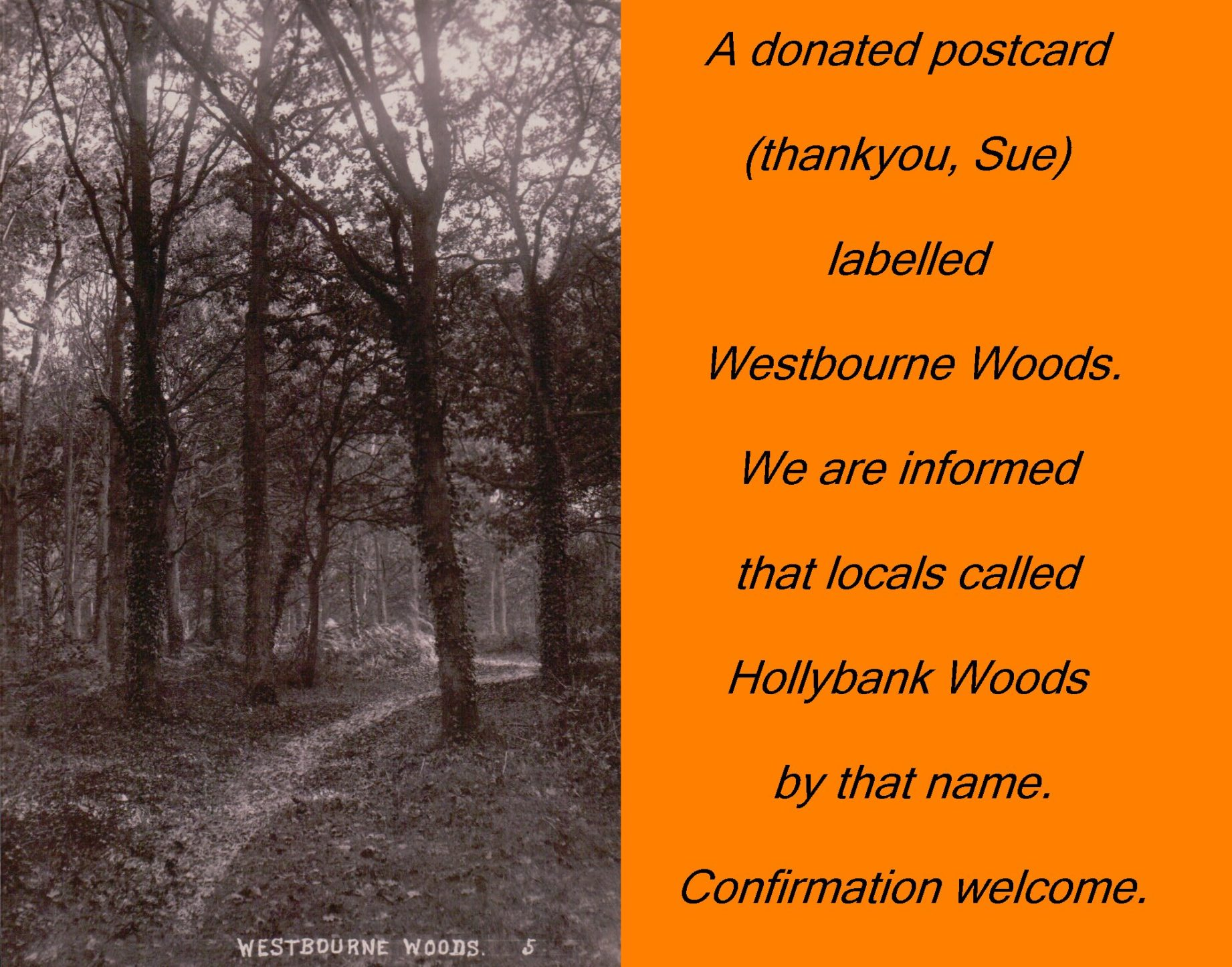 Postcard of Westbourne Woods by J Welch