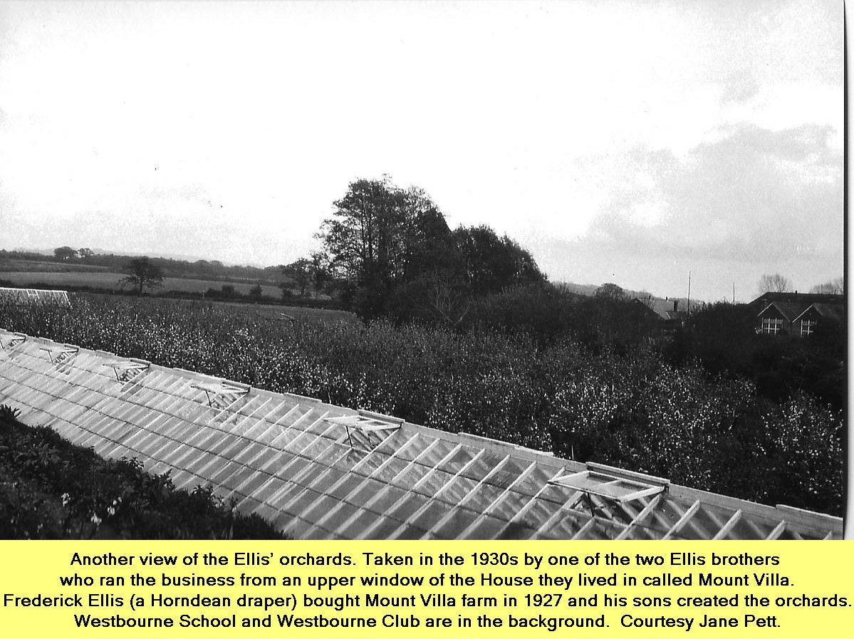 WESTBOURNE HISTORY PHOTO, ELLIS ORCHARD, MOUNT VILLA, ELLESMERE,